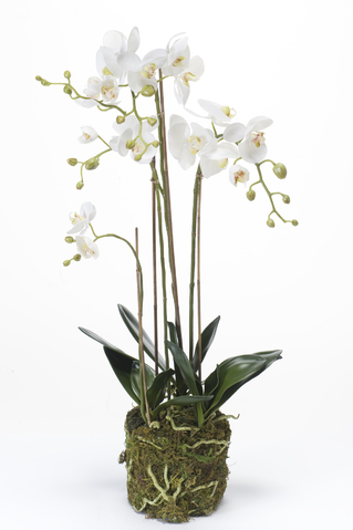 Artificial Phalaenopsis orchid with moss 80cm