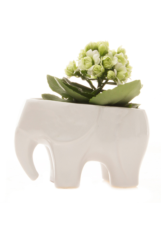 Elephant ceramic white