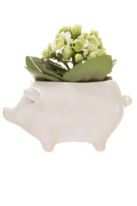 Pig ceramic white