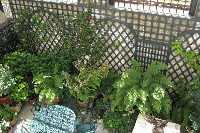 Garden Trellis & Structures