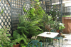 Garden Trellis and Structures