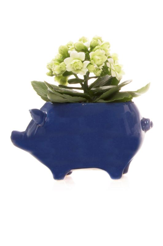 Pig ceramic blue