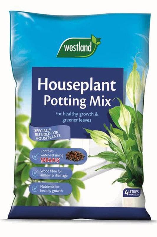 houseplant 4L.jpg