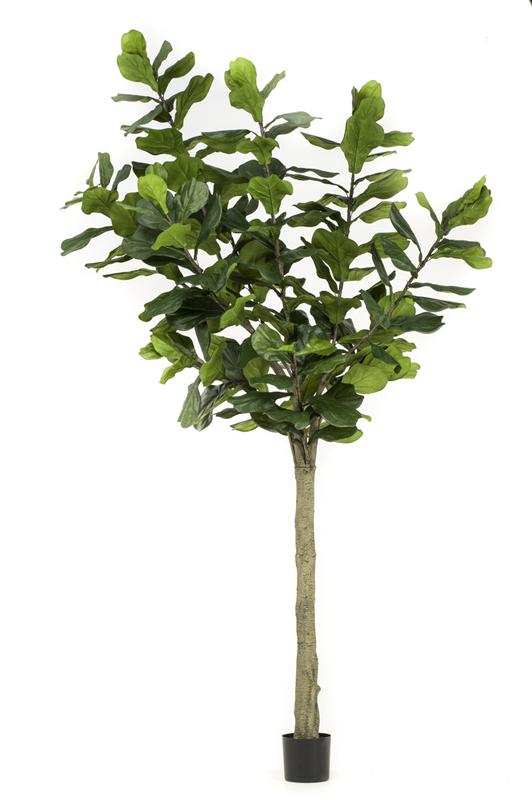 Artificial Ficus Lyrata 300cm