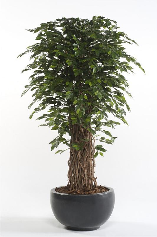 Artificial Ficus Benjamina 175cm
